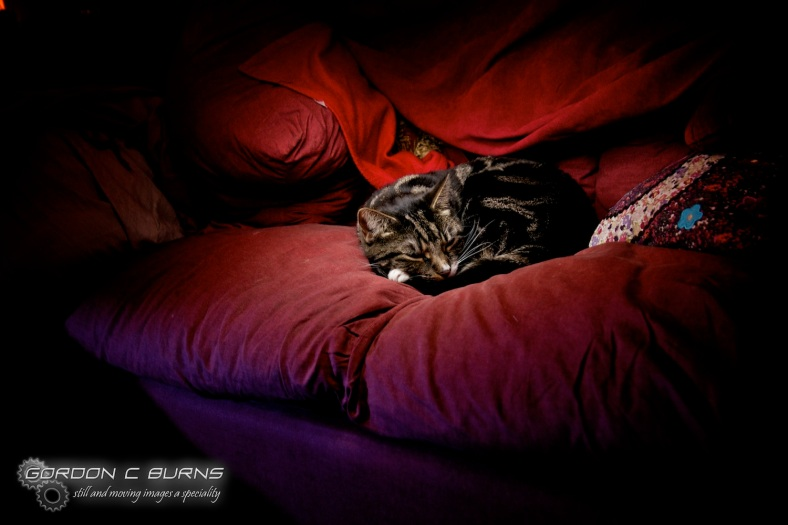Light Painted Cat!