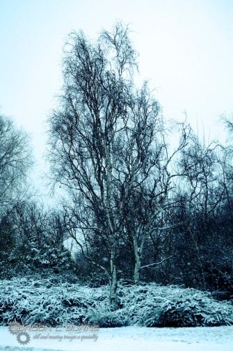Snow in London 3, 2013 © Gordon C Burns